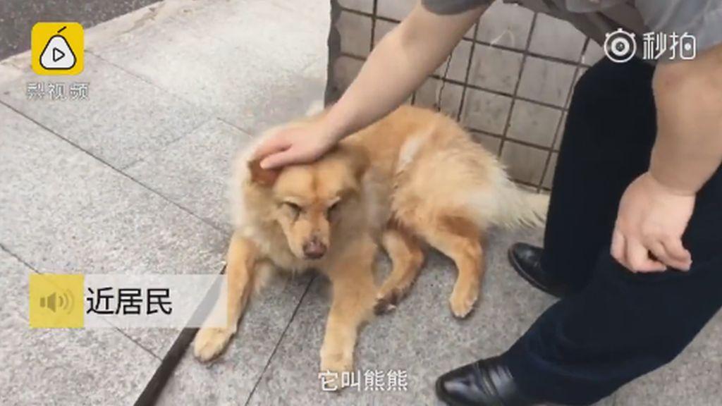 Xiongxiong le chien fidèle 2