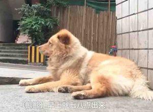 Xiongxiong le chien fidèle