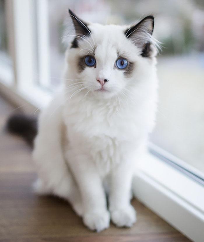 chat mignon 3