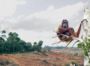 déforestation huile de palme