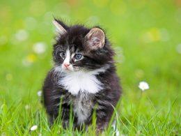 plus beaux chats